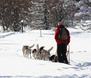 sled-dogs-588679